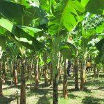 agriculture-nigeria